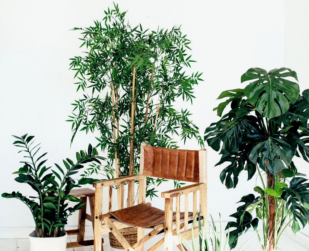 chaises plantes vertes