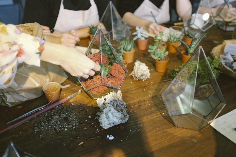 terrariums atelier personnes plantes terre bois marron