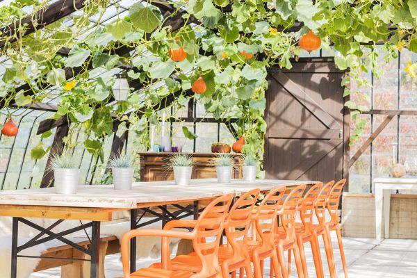 chaises orange oranges serre donatienne onehousestand feuilles plantes